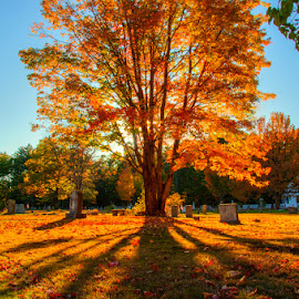 Casting Shadows by Chris Cavallo - City,  Street & Park  Cemeteries ( tree, fall colors, autumn, shadow, fall, cemetary, cemetery, autumn colors, leaves, new hampshire, golden hour, graveyard,  )
