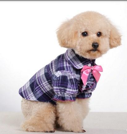 アメージング犬のファッションスタイル