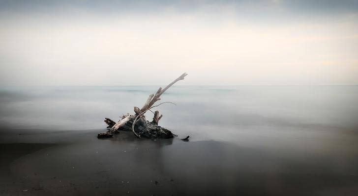 wood on the sea di Sil-M