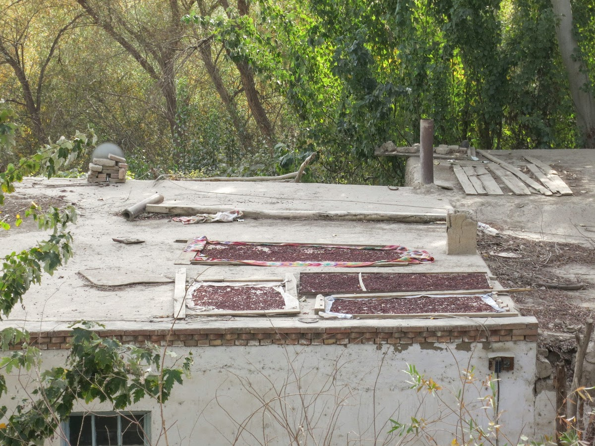 China. Xinjiang Turpan . Raisins Drying Over House Roof