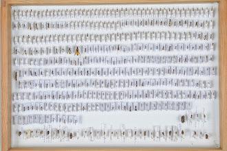 Photo: ZSM-HD-0001430 Various Ichneumonidae indet.
