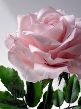 Photo: Rose aus Blütenpaste - Gumpaste - Zucker