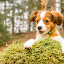 Taking a break by Colin Harley - Animals - Dogs Portraits ( tosca, pup, moss, nikkor, forest, cute, kooiker, d750, trees, puppy, dog, nikon, kooikerhondje, animal )