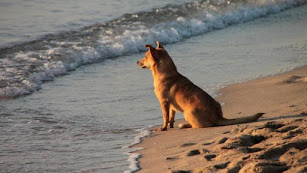 Un perro mira el mar desde la orilla de una playa almeriense.
