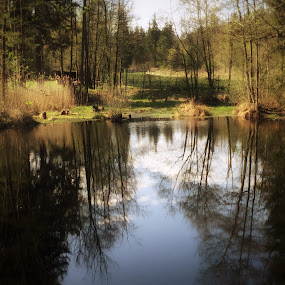 Small pond  by Helga Be - Landscapes Waterscapes ( reflexion )