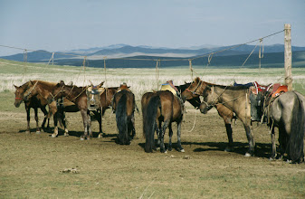 Photo: 03151 ブルド/ハスバータルイ家/鞍をつけた馬
