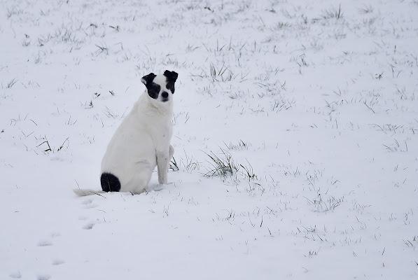 Pepe e la neve di Wilmanna