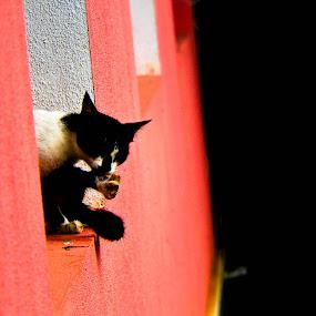 by Deepak Prabhu - Animals - Cats Portraits