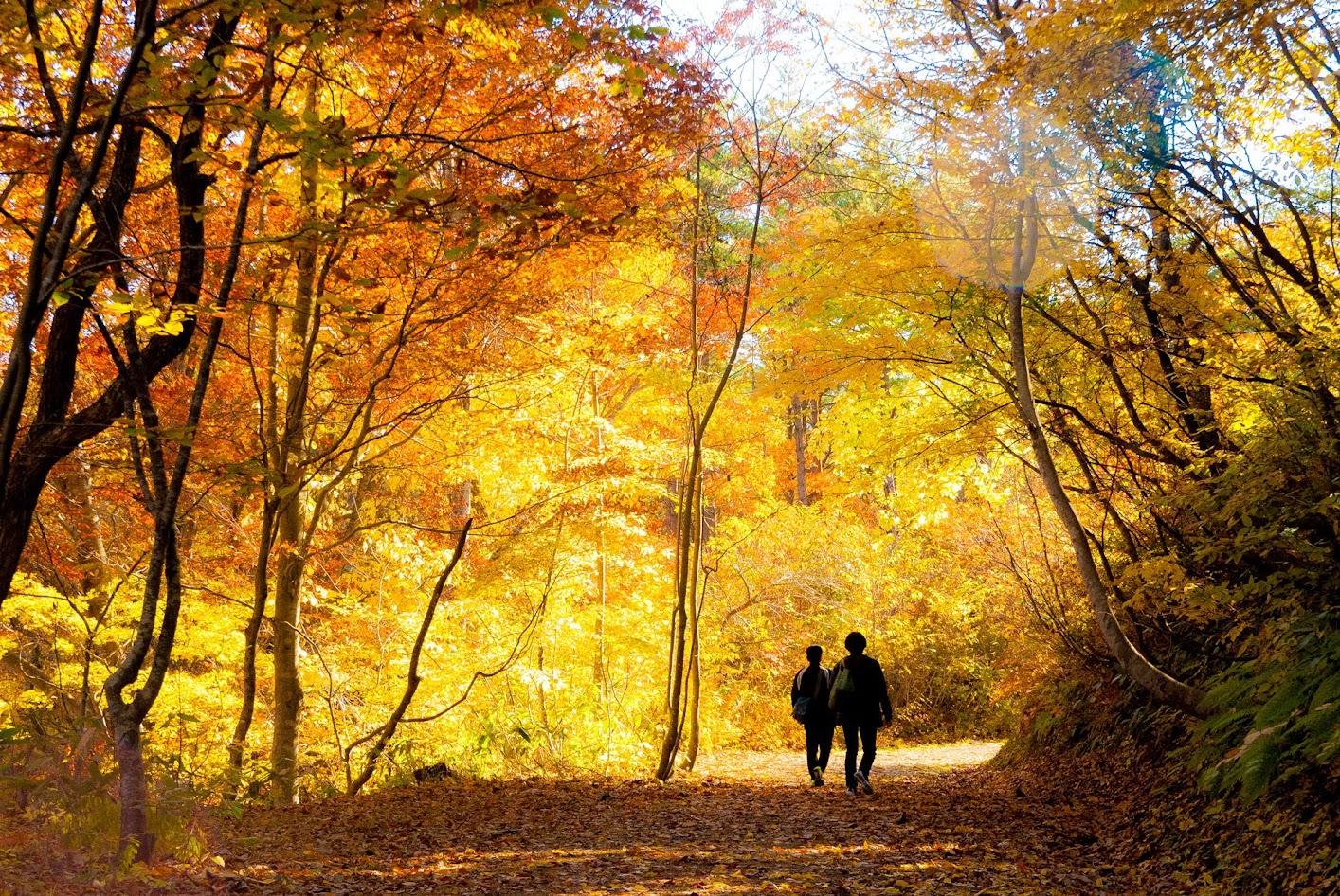 Lý do cho những chiếc lá mùa thu kỳ diệu ở Nhật Bản 6