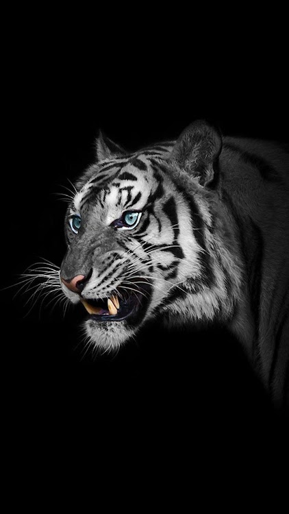 White Tiger Wallpapers Android Apps Appagg