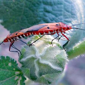 try to catch them close... by Shubhendu Bikash Mazumder - Animals Insects & Spiders