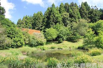 Photo: 拍攝地點: 梅峰-黑水潭 拍攝植物: 水生鳶尾(前方黃色花) 拍攝日期:2012_05_14_FY