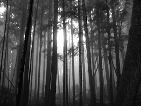 Photo: Heading through the woods to Mystic Beach