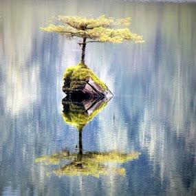 Fairy Lake solitude by Brenda Baird - Uncategorized All Uncategorized (  )
