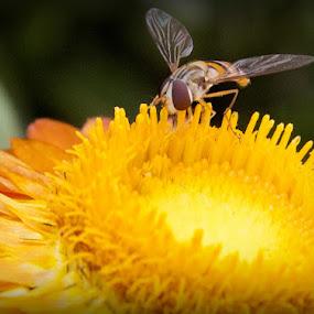 by Peeyush Sharma - Nature Up Close Flowers - 2011-2013