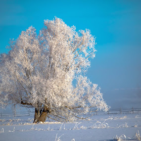 Foggy and Frosty by Chad Roberts - Nature Up Close Trees & Bushes ( winter, cold, tree, fog, snow, frost, house, morning, frozen,  )
