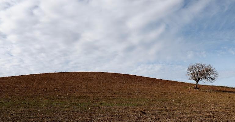 L'albero e la collina di Fe140