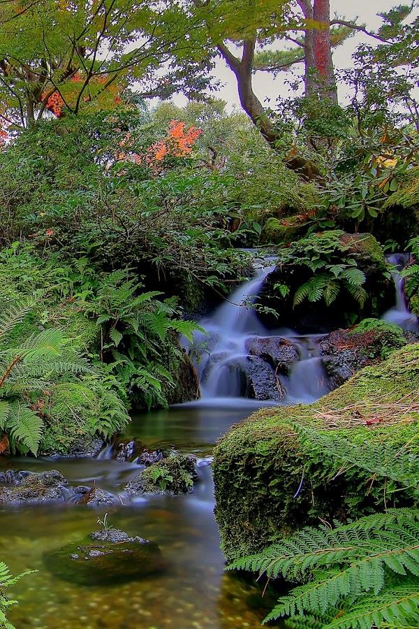 by Yudy Bento - Nature Up Close Water