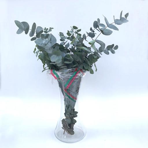 flores eucaliptu