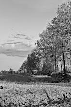 Photo: Trees beyond horizon...  #monochromephotography #monochromemonday #monochrome #landscapephotography #landscape #monochromelandscapes