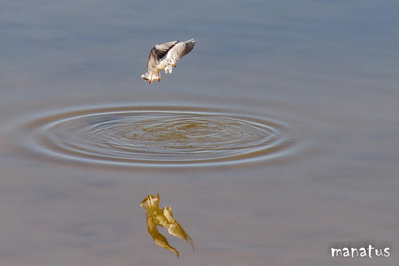 gaviota sobre el agua