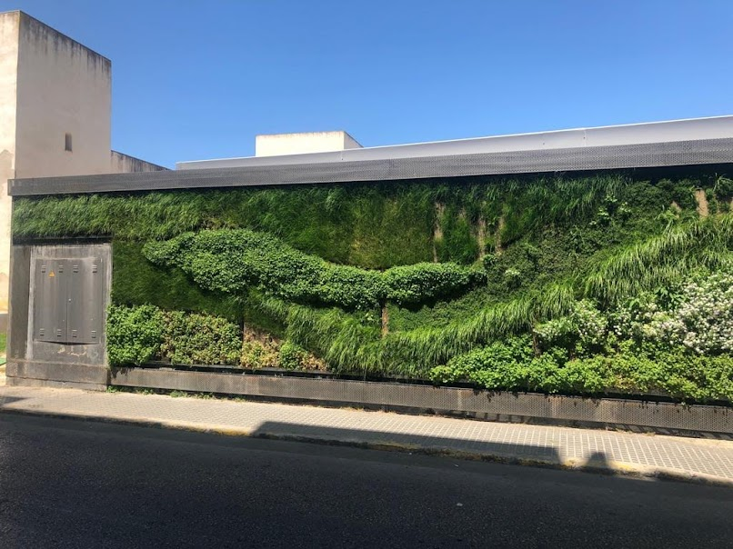Foto del buen estado del jardín vertical realizado en San Fernando de Cádiz