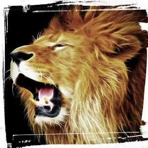 Wild Lion Hunting Sniper 3D