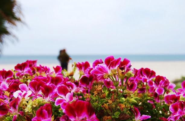 81 I fiori di Tamparinu