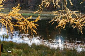 Photo: I colori ell'autunno
