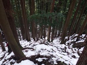 植林帯を降りる