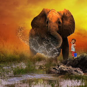 gajahku.jpg
