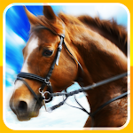 Jockey Viva Go icon