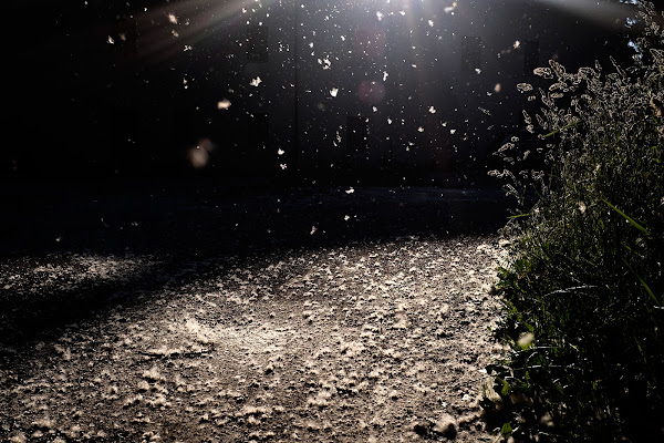 nevicate primaverili di faranfaluca