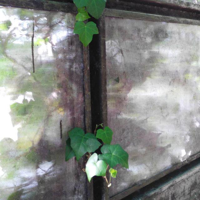 Fessure di primavera   di Pans_5