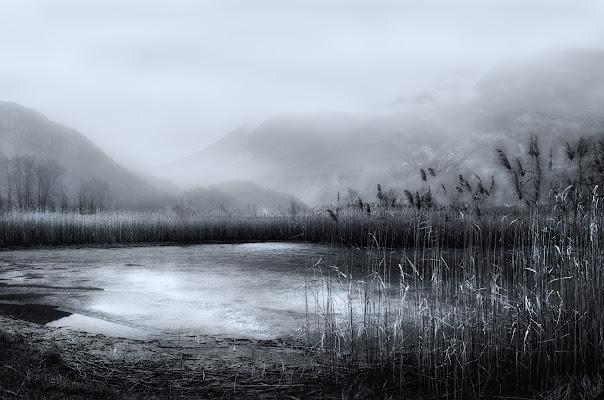 The swamp di Moreno re