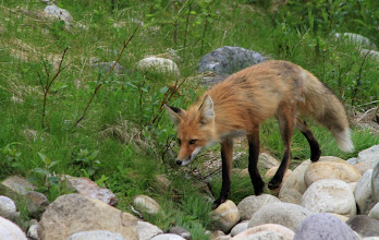 Photo: Miette Hot Springs - Fuchs