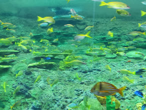 Photo: Turtle Reef