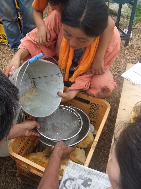 きゅうりの種を水であらって、たねの周りのゼリー質を取り除き、沈んだ種を集めます