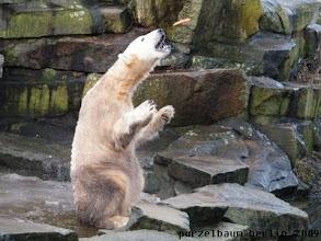 Photo: Die fliegt besser zu Knut :-)