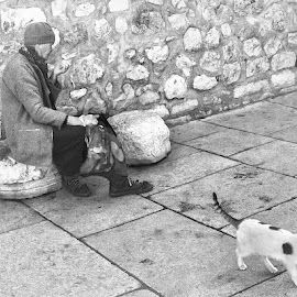 Ldy and cats by Mirko Ilić - People Street & Candids ( loa, cat, stone, lady, lonely, wall,  )