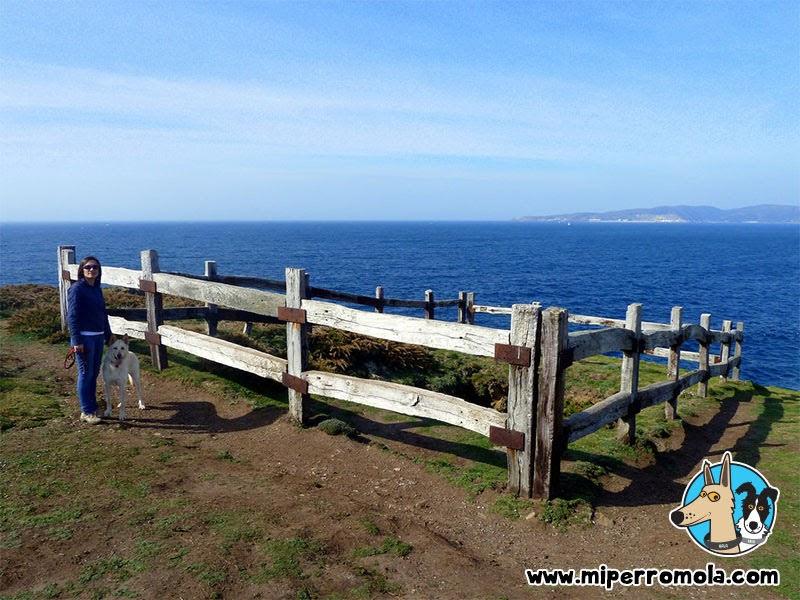 Senderismo con Perro Seixo Branco Ruta 4, A Coruña con un Can de Palleiro y un Border Collie