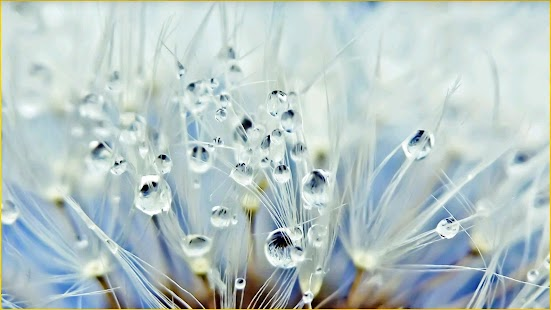 Water Drop Wallpapers Android Apps on Google Play
