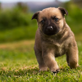 Out for a walk by David Morris - Animals - Dogs Puppies