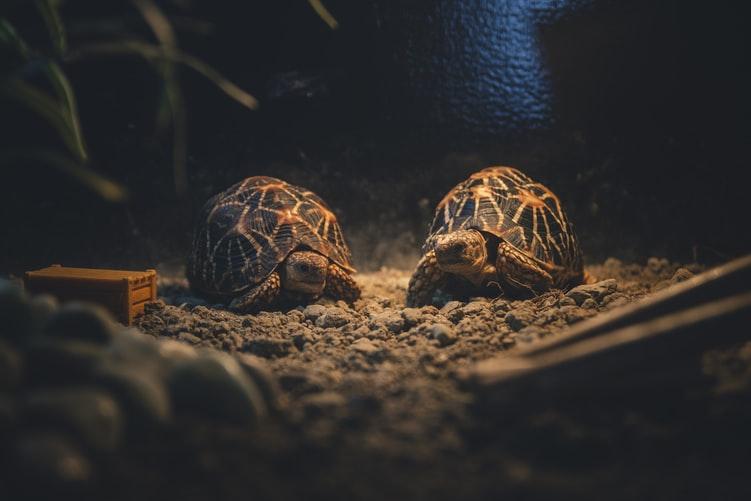 How to set up a tortoise house