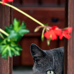I Can See You by Stuart Wilson - Animals - Cats Portraits