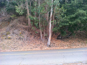 Photo: You can see by the difference in color, that the area under the eucalyptus and oak is moistest