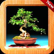550+ Bonsai Tree Design icon
