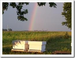 rainbowhivesmall