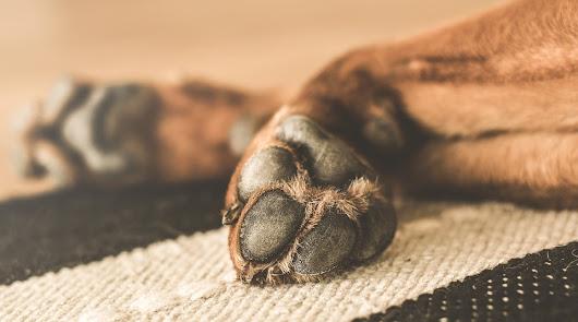 Condenado por maltrato tras la muerte de cuatro de sus cinco perros en una finca