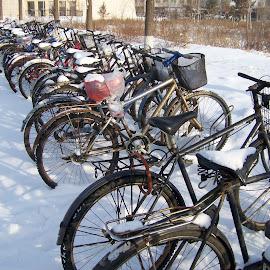 Bicycles by Jaliya Rasaputra - Transportation Bicycles (  )